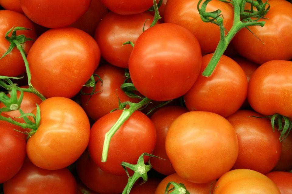 Energia elettrica dai pomodori: il progetto di un team di ricercatori statunitensi