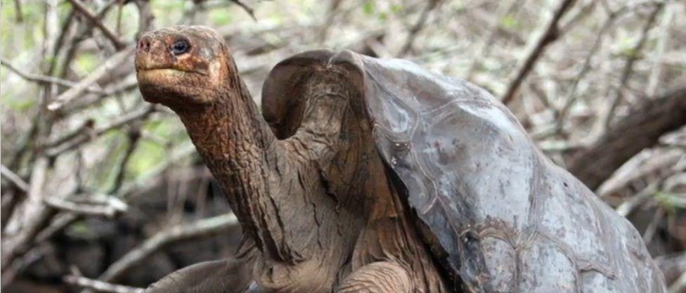 Animali estinti: tutti quelli che non vedremo più sulla Terra