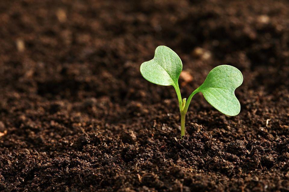 Agricoltura senza acqua: Waterless Farming ci spiega come funziona