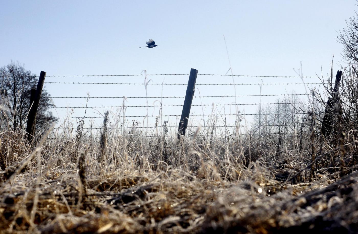 Chernobyl, Natura si riprende i luoghi del disastro adattandosi alle radiazioni