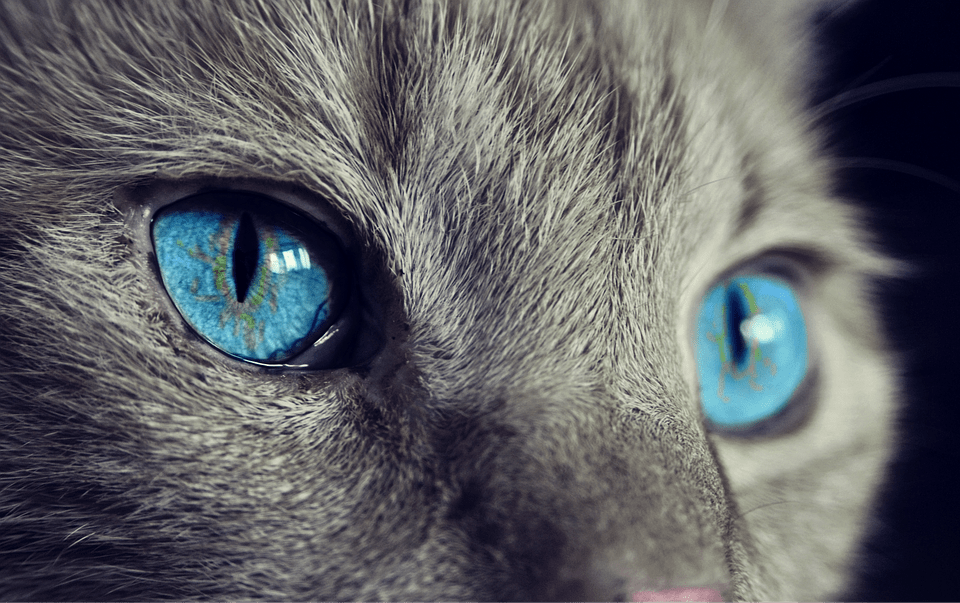Avere un gatto potrebbe causare rabbia e aggressività