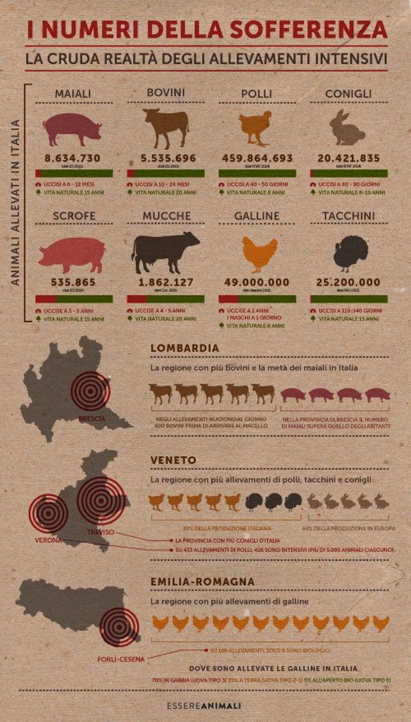 infografica essere animali
