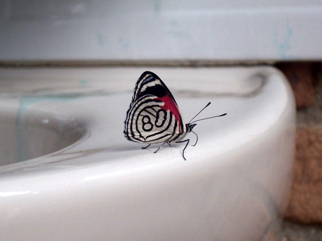 Farfallina con il numero 80 sull'ala