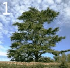 Test personalita alberi 1