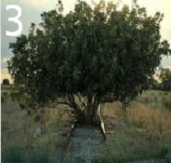 Test personalita alberi 3