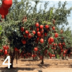 Test personalita alberi 4