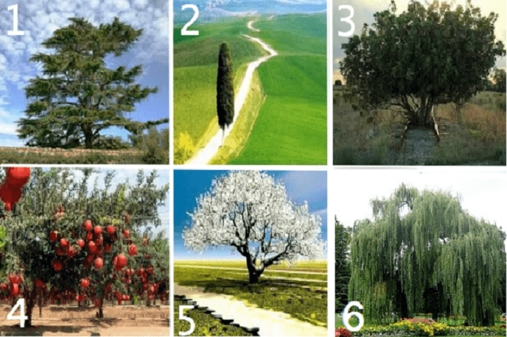 Test personalita alberi