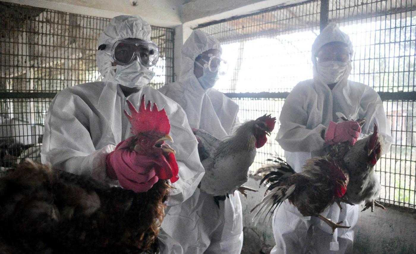 India, allerta influenza aviaria in allevamento di pollame