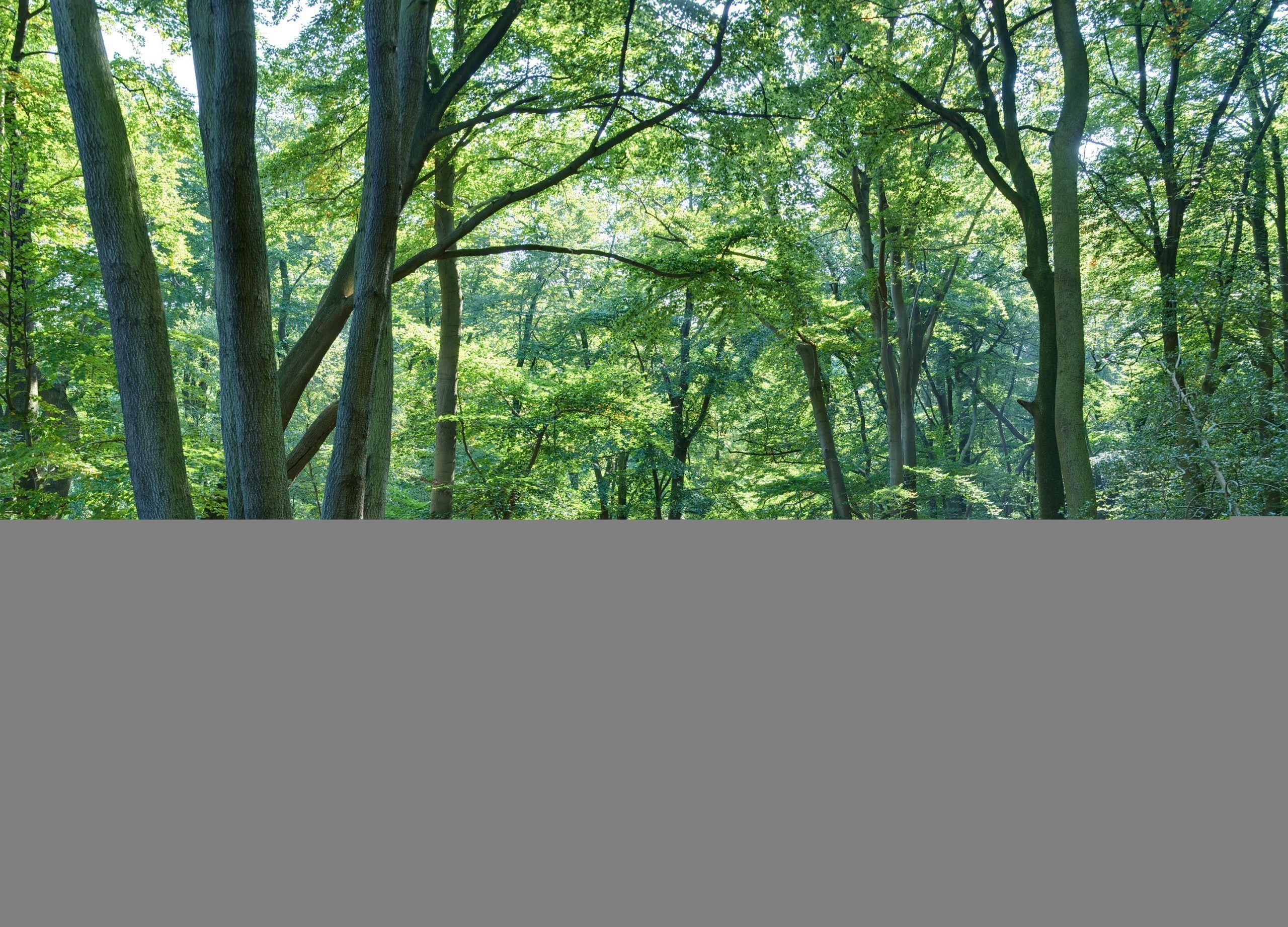 bosco bambino lasciato solo in giappone