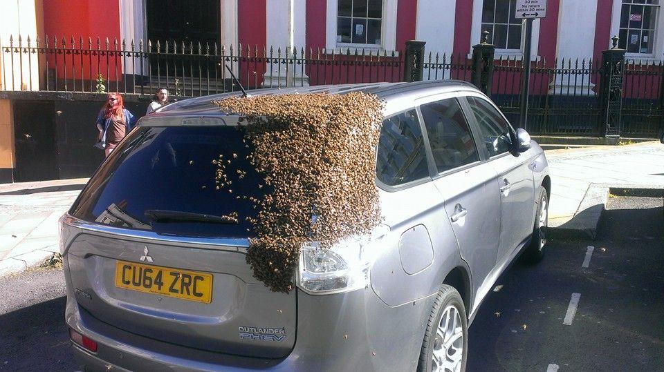 foto api incollate all'auto