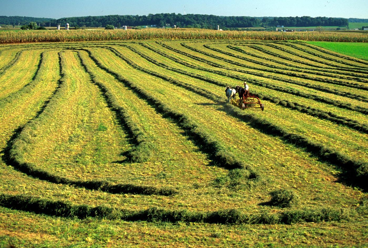 Amish e lavoro
