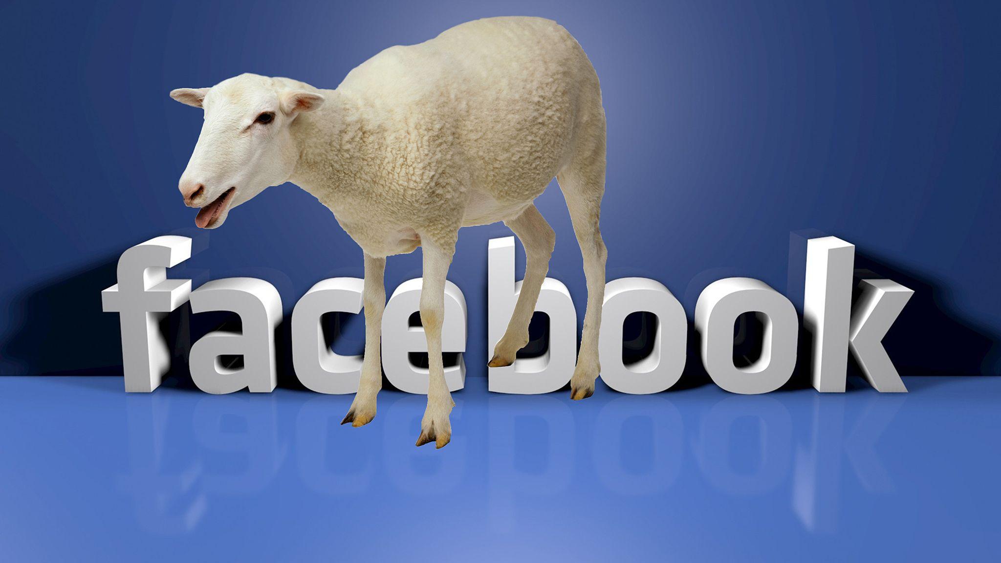 Facebook pecora