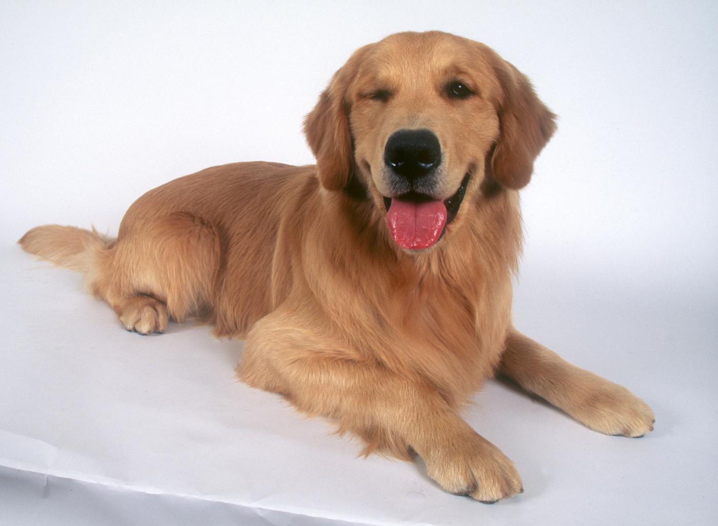 Argo, il cane del marò Salvatore Girone è tornato a casa