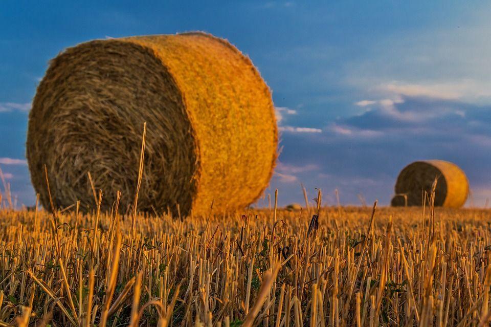 Cambiamenti climatici: le conseguenze in agricoltura