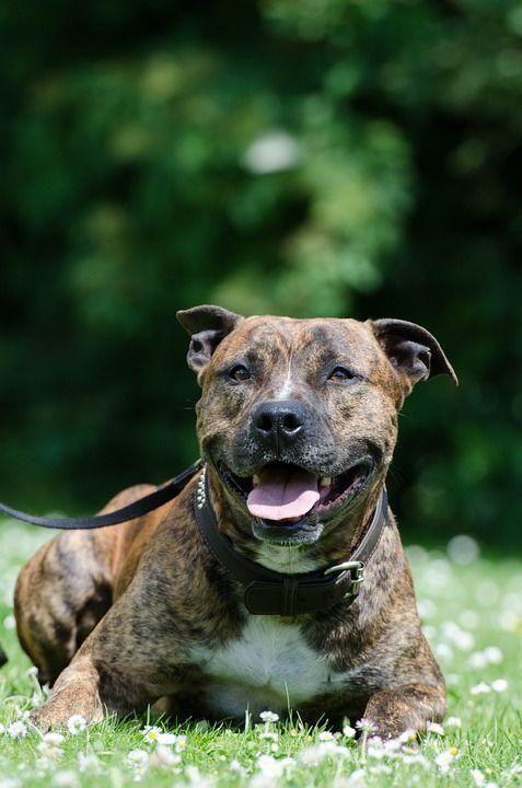 Il cane più solitario d'Inghilterra scritturato nel film 'Trasformers 5'