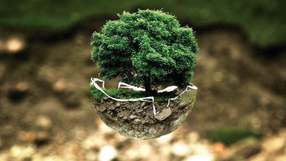 comportamenti ecologici