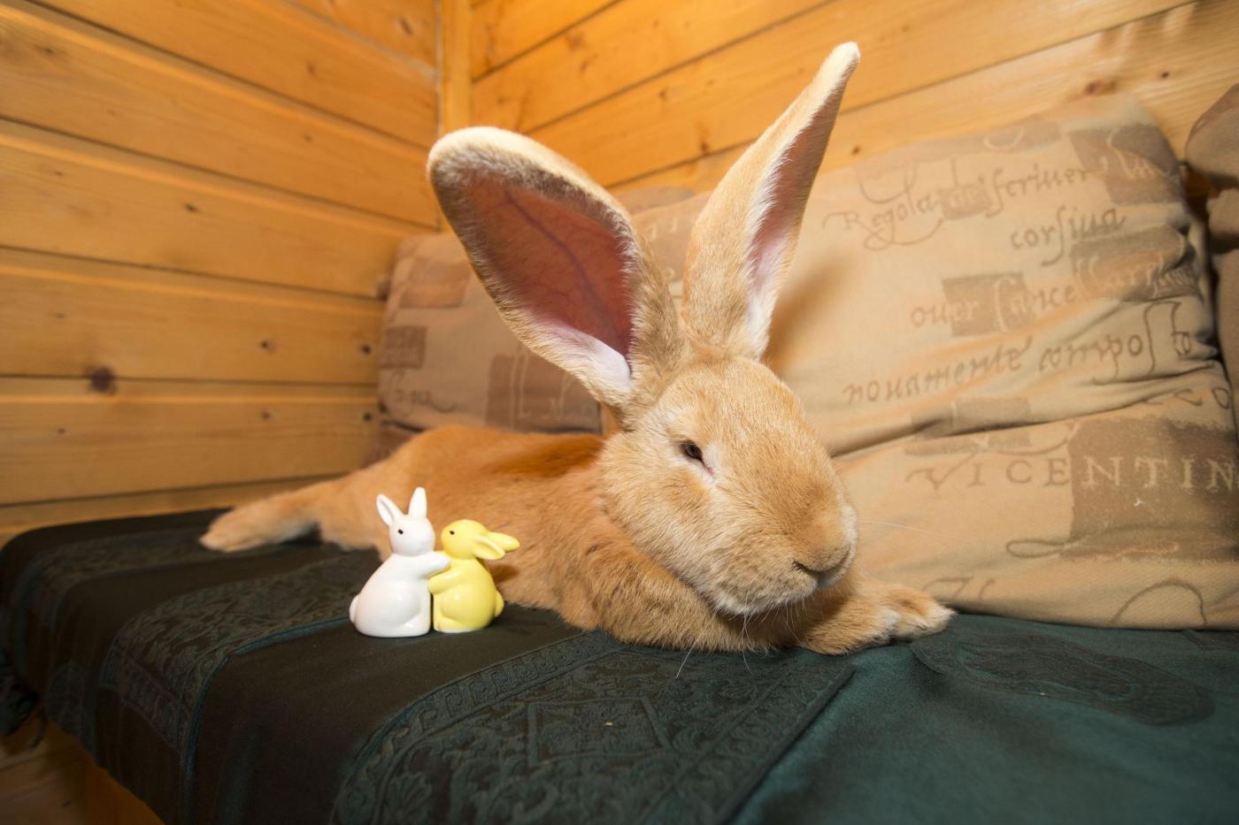 Rabbit rehomed