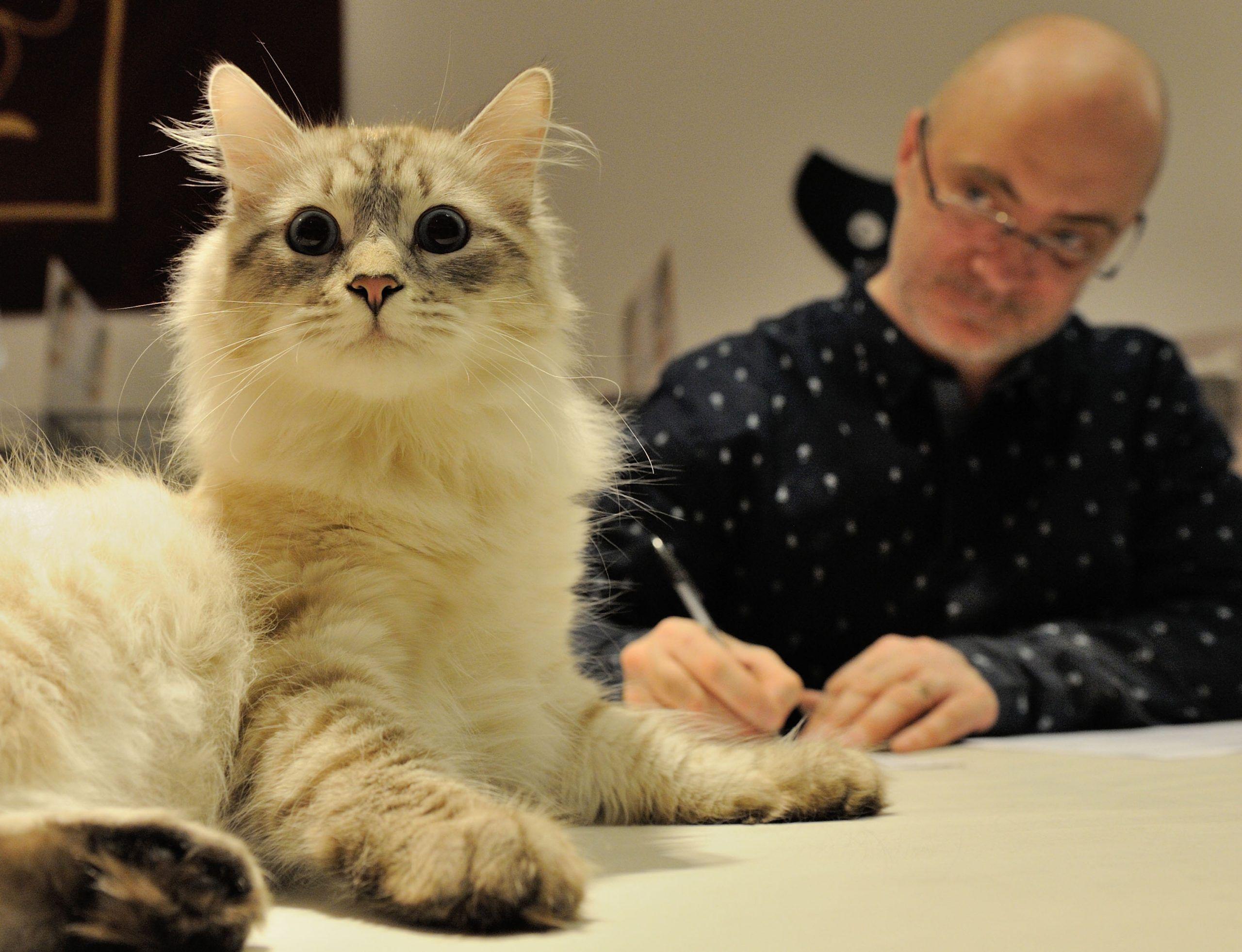 gatto stress maturità