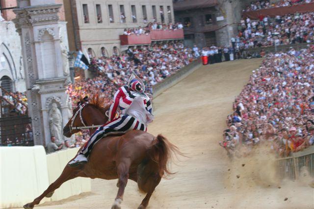 palio cavallo foto repertorio