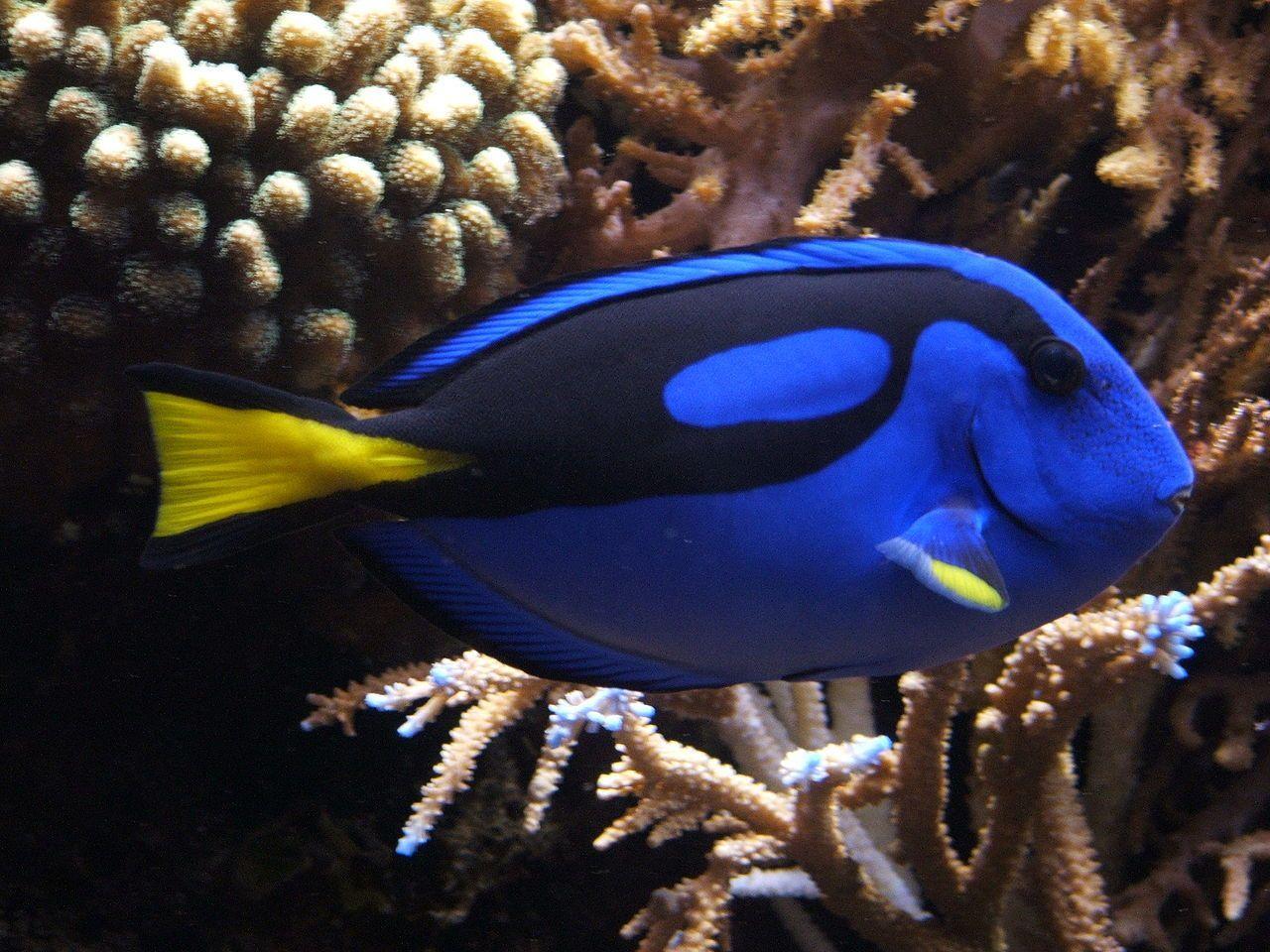 Commercio pesci tropicali: idea allevamenti per salvare la barriera corallina