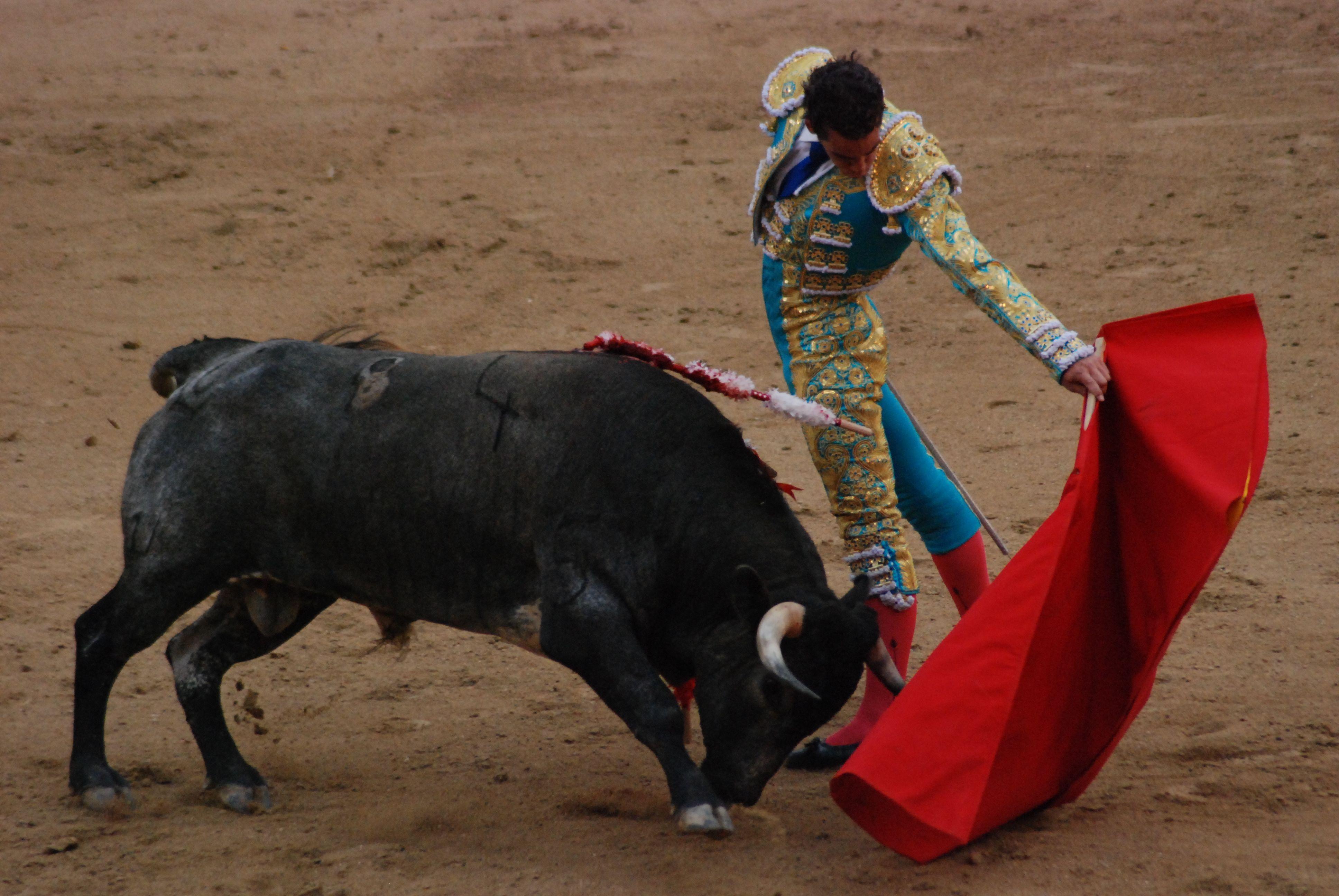 Corrida a Madrid finisce nel sangue: il torero Pablo Belando è grave