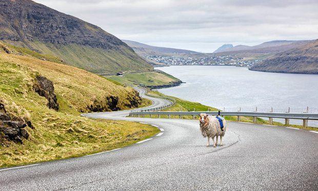 Sheep View: l'alternativa ovina a Google Street View nelle Faroe