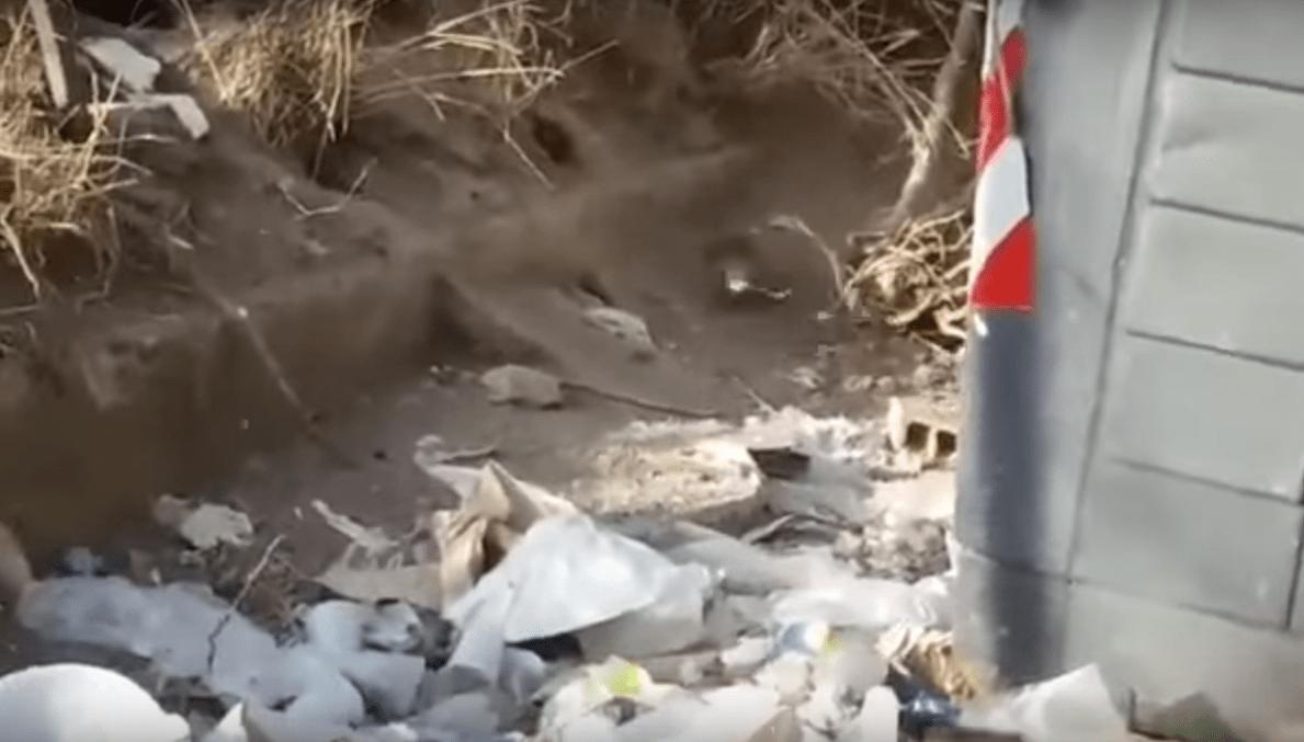 Roma, il video dei bambini che contano i topi tra la spazzatura di Tor Bella Monaca