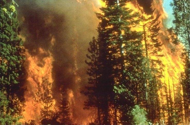 Incendi dolosi in Italia: la mappa di un disastro ambientale devastante