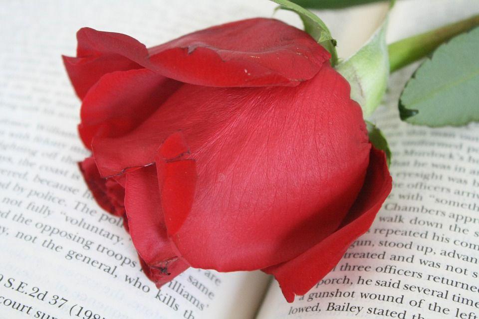 Libri erotici, i più belli da leggere