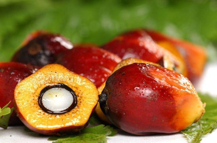 Olio di palma sostenibile: è possibile? Opinioni di chi lo difende