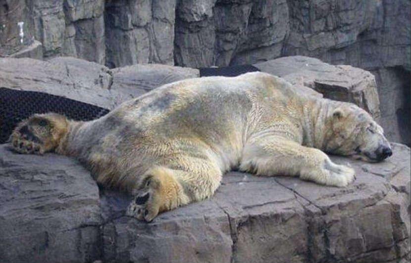 Morto Arturo, l'orso polare più triste al mondo