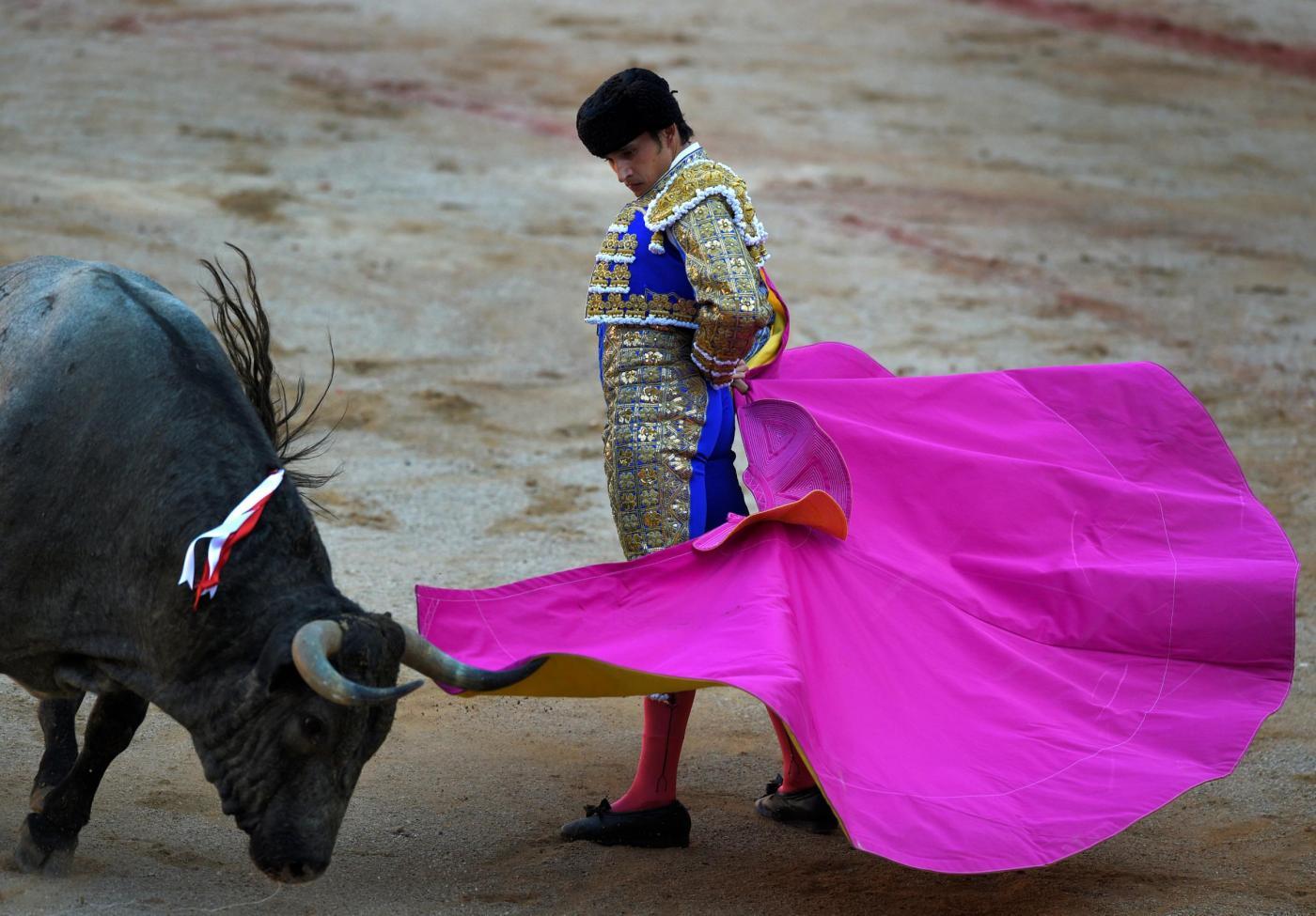 Torero morto in Spagna: incornato dal toro durante la corrida