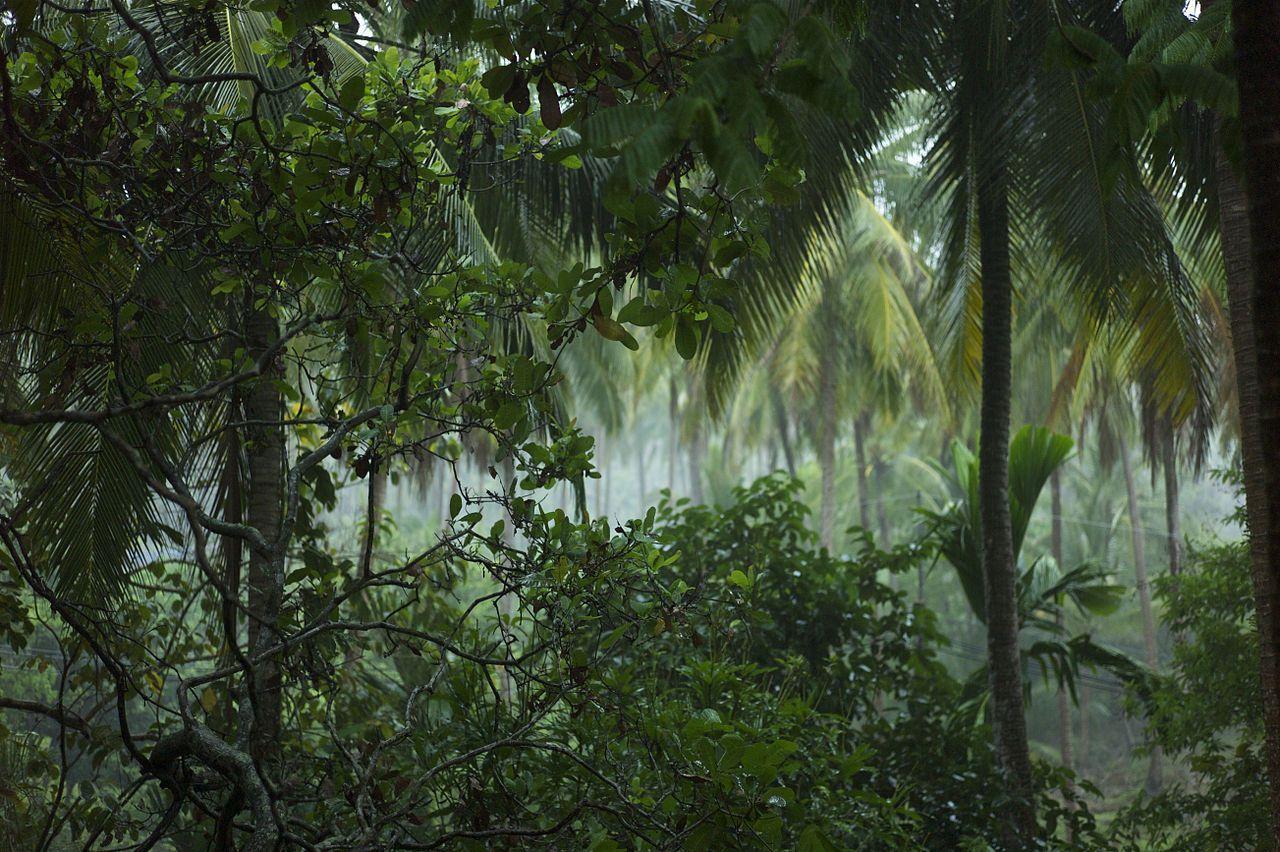 Foresta Thailandia: aerei sganciano bombe di semi per ripopolare gli alberi