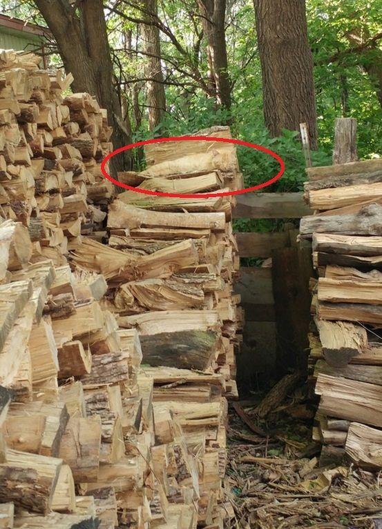 Gatto sui ciocchi di legno evidenziato