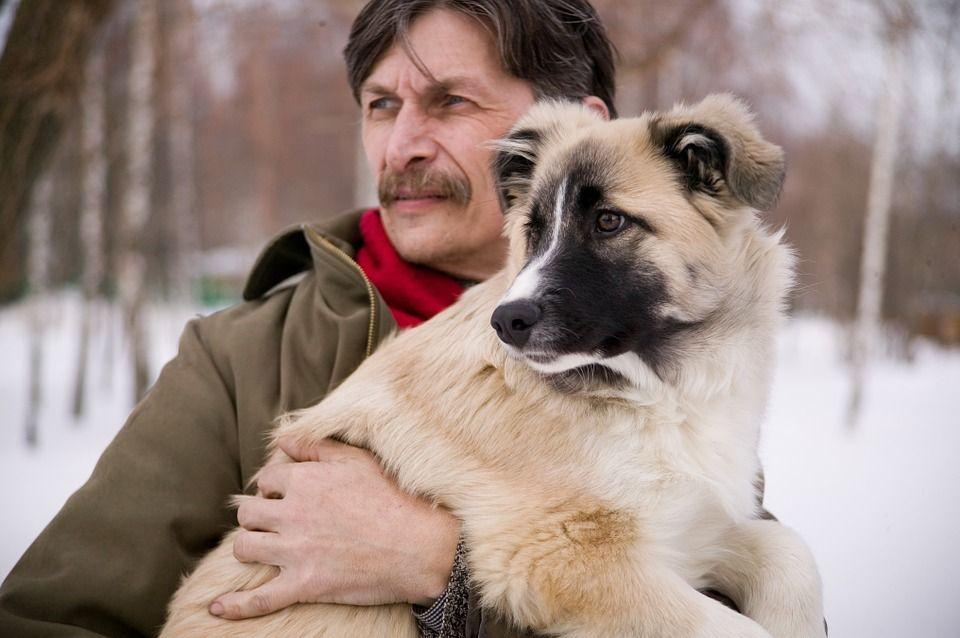 Vacanze volontariato animali: la nuova frontiera del viaggio ecologico e solidale