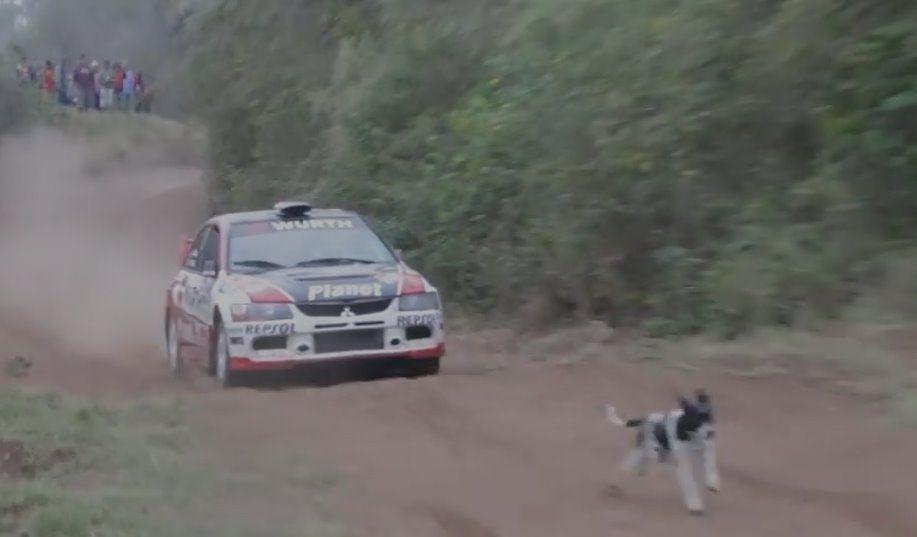 Rally cagnolino