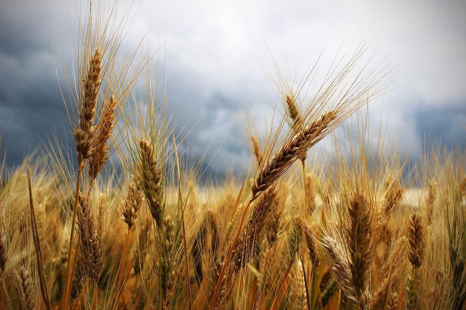 Agroecologia, cos'è, come funziona e gli esempi più famosi