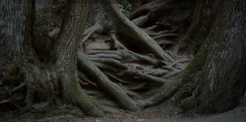 alberi intelligenti