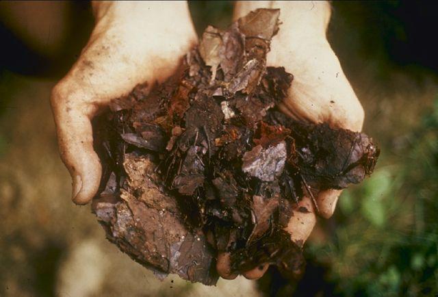 fertilizzanti bio