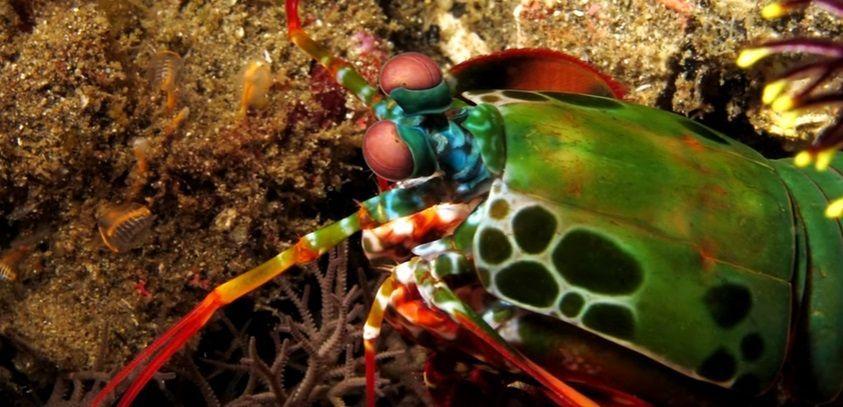 Animali del mare profondo: quelli più strani e assurdi