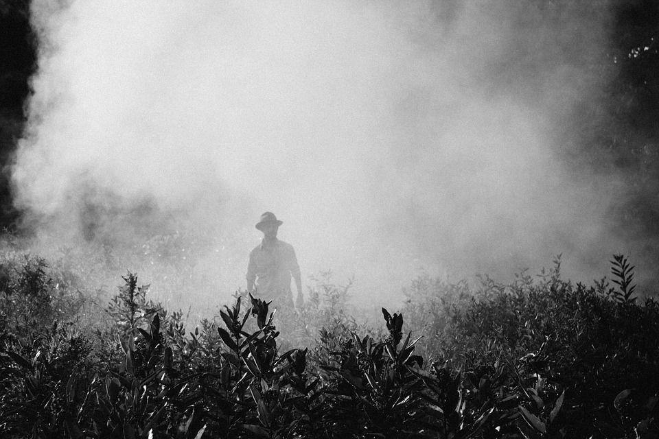 Diserbanti senza chimici, dalla Sardegna un metodo con vapore e scarti naturali