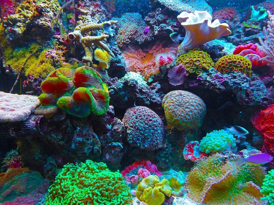 Barriera corallina australiana, 67 per cento morta nel 2016