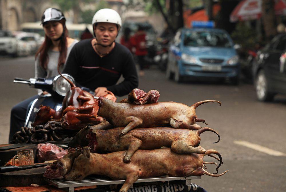 carne di cane vietnam