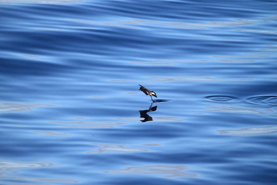 oceano galapagos