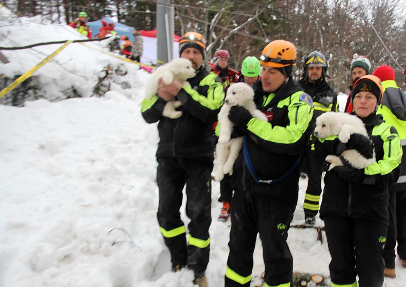 Rigopiano : i soccorritori trovano vivi i tre piccoli cuccioli