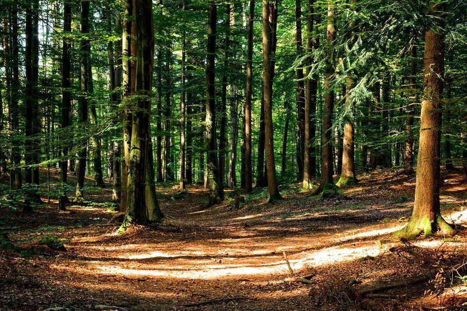 aumentare foreste