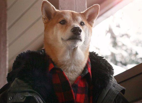Bodhi, il cane modello da 15mila dollari al mese che fa impazzire il web