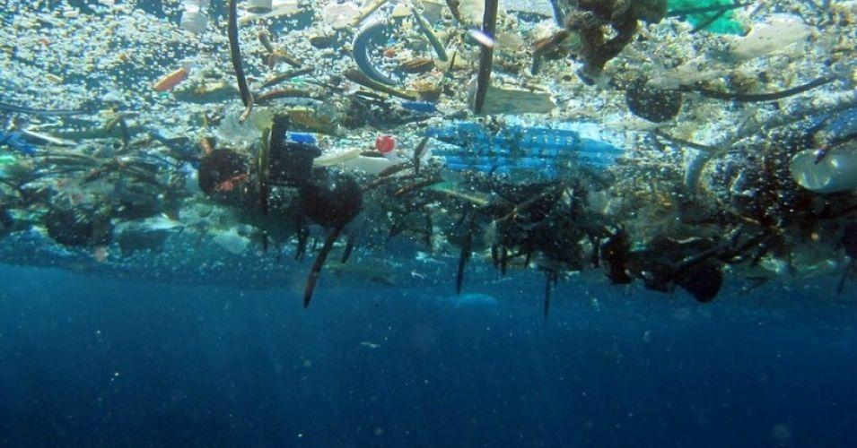 Plastica nei pesci: chi mangia ingerisce 11mila frammenti l'anno