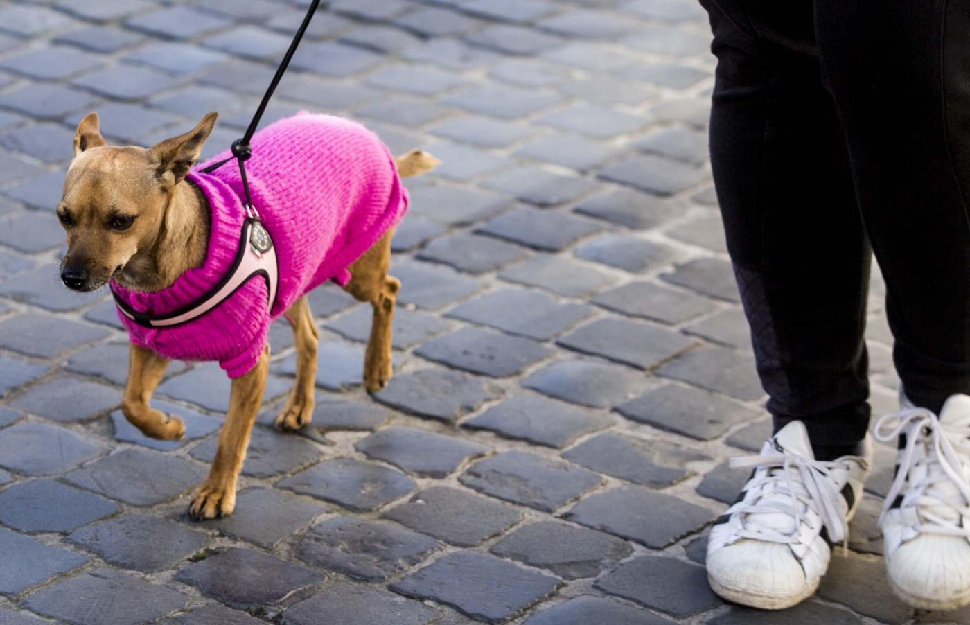 M5S, a Torino la tassa per i cani fa discutere: cosa prevede?