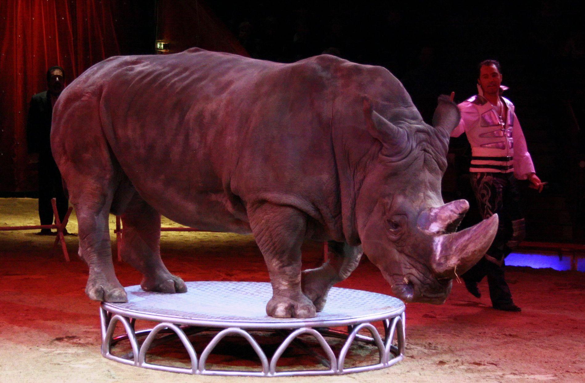 Circo con animali in Italia sempre più in crisi, riforma per abolirlo in Senato